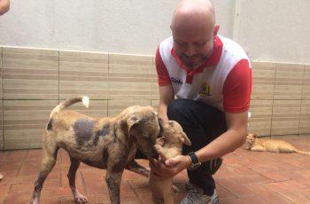Vereador Aleks Palitot apresenta Projetos de Lei voltados à causa animal